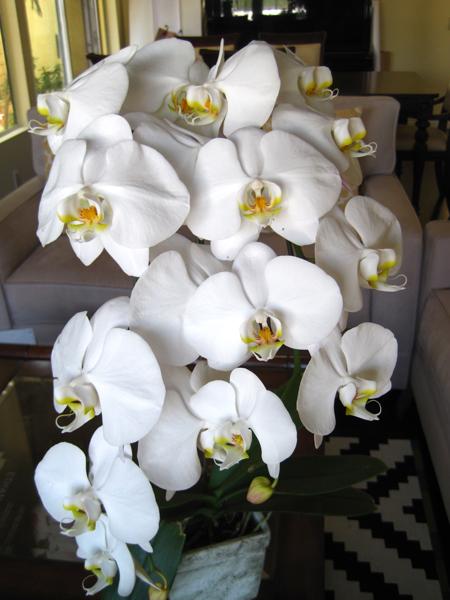白い蘭の花Photo © Chizuko Higuchi