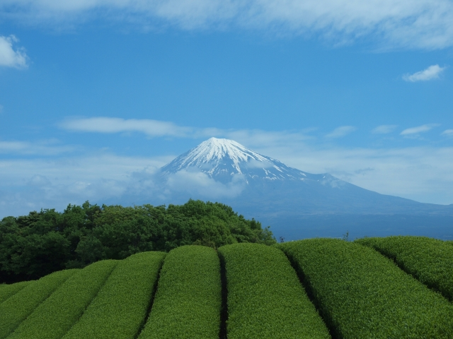 日本帰国と帰化申請